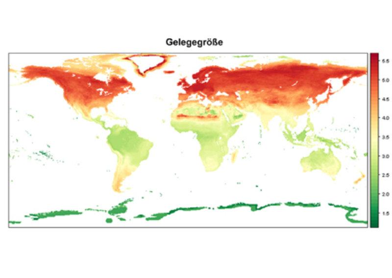 Weltweite Unterschiede der durchschnittlichen Gelegegrößen innerhalb von Gemeinschaften von Vogelarten.