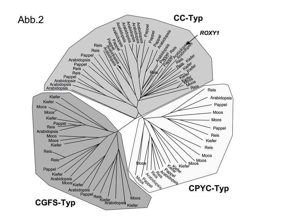 Aminosäure-Sequenzvergleiche von GRX verschiedener Landpflanzen zeigen, dass GRX drei Subklassen, den CGFS-, CPYC- und CC-Typ bilden.
