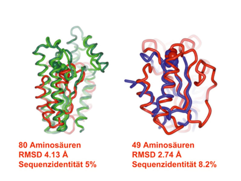 "Der aus Cdc25A (rot) 11-β-HSD 1 und 2 (grün) und AChE (blau) gebildete ""protein structure similarity cluster""."