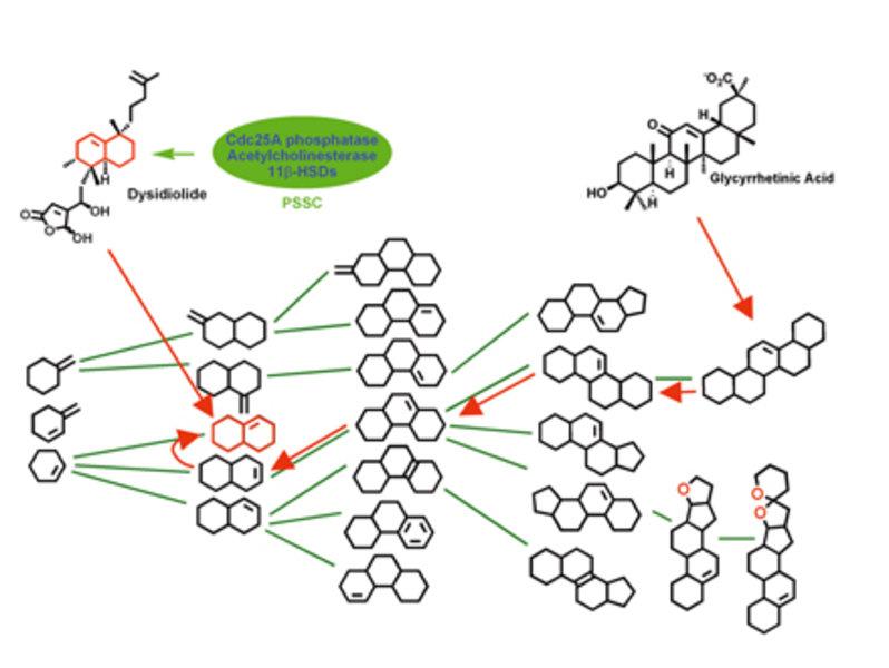 Hangeln durch den NP-Baum: Die komplexe Rückgrat-Struktur der Glycyrrhetinsäure wird sukzessiv auf einfachere Strukturen zurückgeführt.