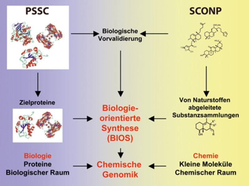 Gemeinsame Anwendung von PSSC und SCONP in der chemischen Genomik.