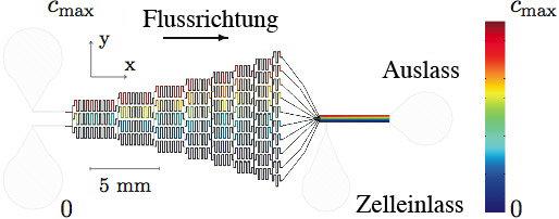 Design eines Mikrokanal-Netzwerkes zur Erzeugung linearer Konzentrationsgradienten. Die farbkodierte Konzentrationsverteilung ist das Resultat einer z