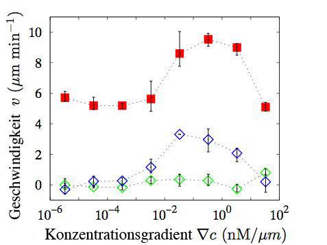 Durchschnittliche Zellgeschwindigkeit senkrecht (grün) und parallel (blau) zum Gradienten, sowie die Zellmotilität (rot) für unterschiedliche Gradient