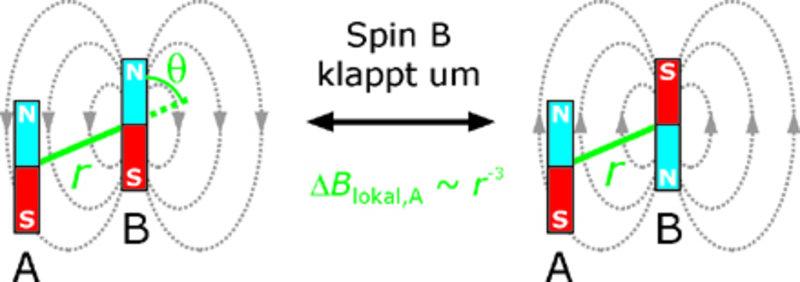 Abstandsbestimmung über die Dipol-Dipol-Wechselwirkung. Das lokale Magnetfeld an der beobachteten Spinsonde A ändert sich, wenn der Spin der Sonde B d