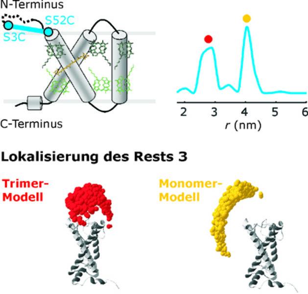 Triangulation des Aminosäurerests 3 des pflanzlichen Lichtsammelkomplexes LHCIIb. Oben links: Strukturschema mit Pigmenten und Positionierung eines Sp