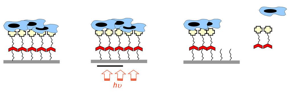 Prinzip der lichtinduzierten Ablösung von Biomolekülen auf der Oberfläche mit der Möglichkeit der räumlichen Kontrolle.