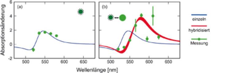 Wellenlängenabhängigkeit der Absorptionsänderung, die durch die Atmungsmode hervorgerufen wird, für ein einzelnes Partikel (a) und für zwei hybridisie