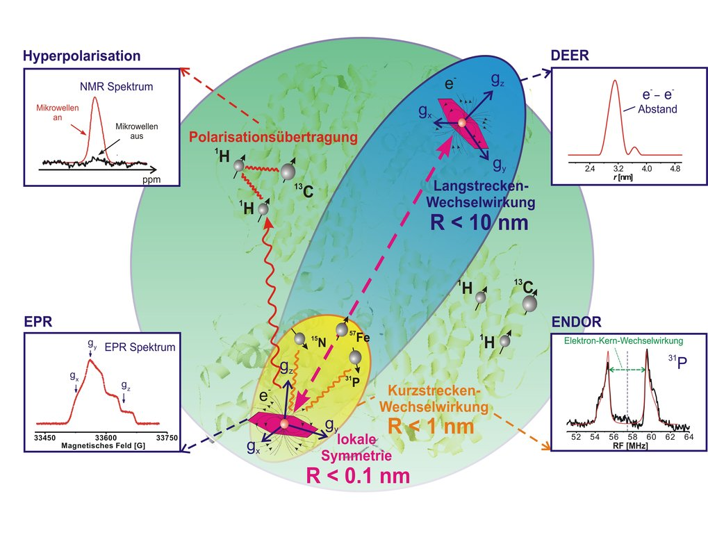 EPR-Methoden zur Detektion von Spin-Spin-Wechselwirkungen in Biomolekülen. Paramagnetische Zentren werden zunächst aufgrund ihrer lokalen Wechselwirku