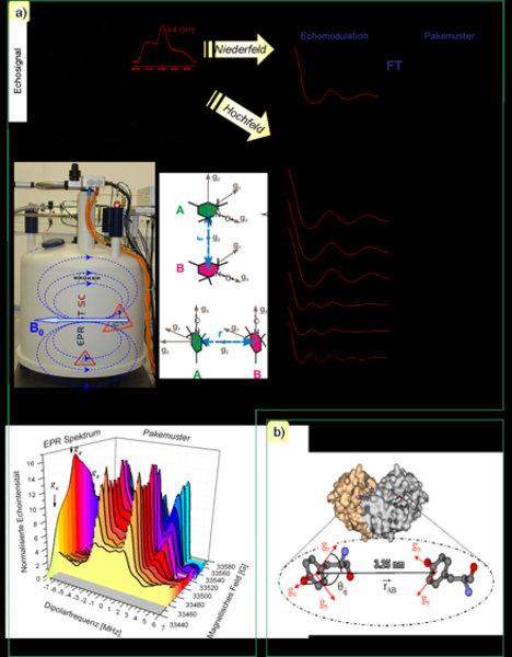 a) Links: EPR-Spektren von Nitroxid-Spinlabeln bei hoher (94 GHz, schwarze Kurve) und niedriger Frequenz (9.4 GHz, rote Kurve). Rechts: Dipolare Zeite