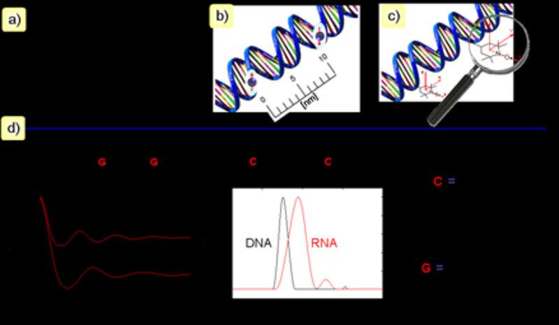 a) Nitroxid-Spinsonden, die üblicherweise zum Markieren von Oligonukleotiden und Proteinen verwendet werden. b, c) Abstandsbereich, der von gepulsten