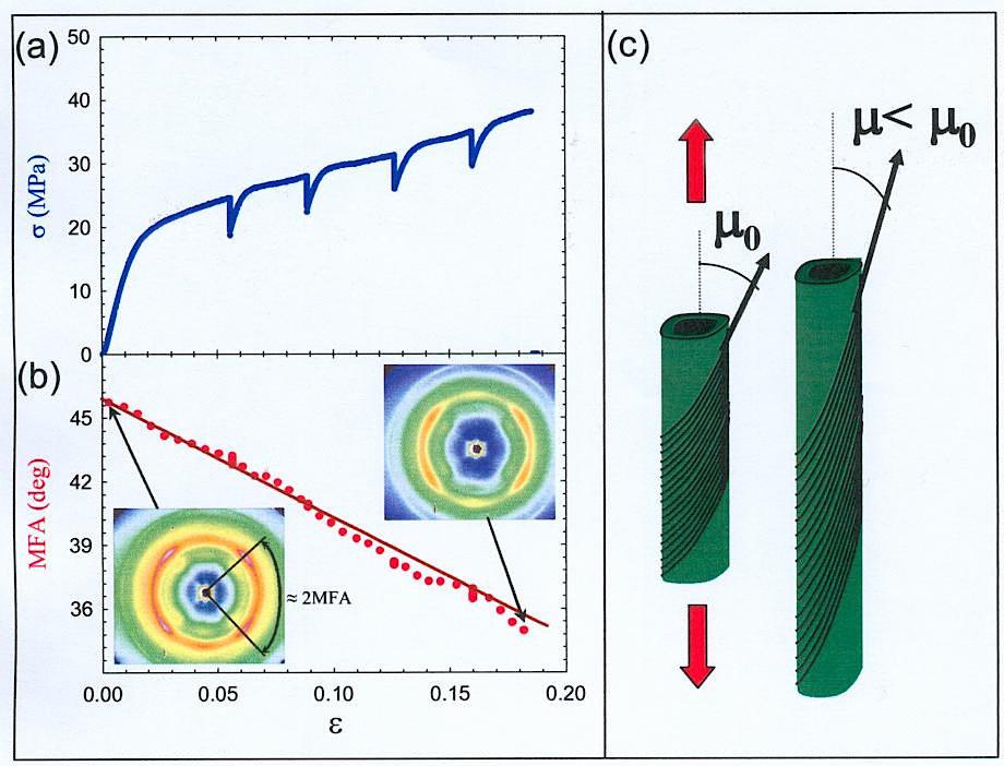 (a) Spannungs-Dehnungsdiagramm einer feuchten Druckholzprobe der Fichte (Picea abies) mit kurzfristiger Unterbrechung der Dehnung im zweiten Teil der
