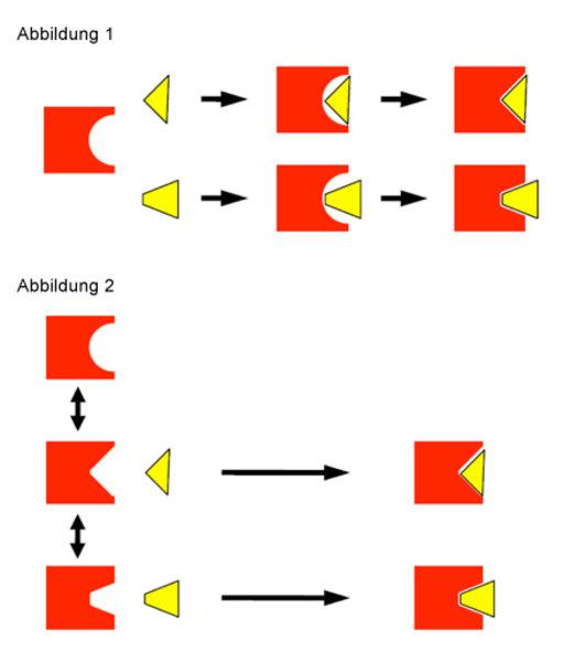 """(1) Modell des """"induced fits"""": Die Konformation des Proteins (rot) in Abwesenheit des Erkennungspartners (ganz links) ist verschieden von der im Kompl"""