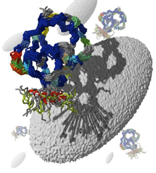 Ensemble des Ubiquitin in Lösung vor einer Bicelle, mithilfe derer die im Text erwähnten dipolaren Kopplungen zwischen Amidstickstoff und Wasserstoff