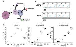 <b>Die IP-FCM-Methode (Immunpräzipitation gemessen mit Durchflusszytometrie)</b> a) Schematische Darstellung des Prinzips der IP-FCM-Technik. b) Ein