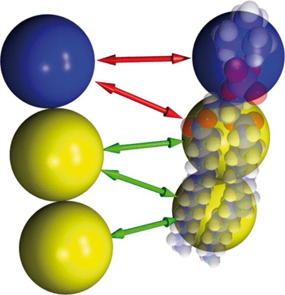 Dieses Kugelmodell eines stark vereinfachten Lipidmoleküls erlaubt es, sehr große Membranen über lange Zeiten hinweg zu simulieren. Das Ausmaß der Ver