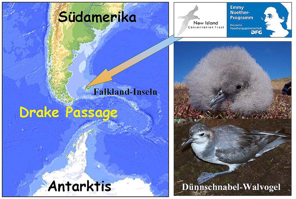 Die Falkland-Inseln liegen auf dem Patagonischen Schelf. Durch die Meerenge zwischen Südamerika und der Antarktischen Halbinsel, die Drake-Passage, wi