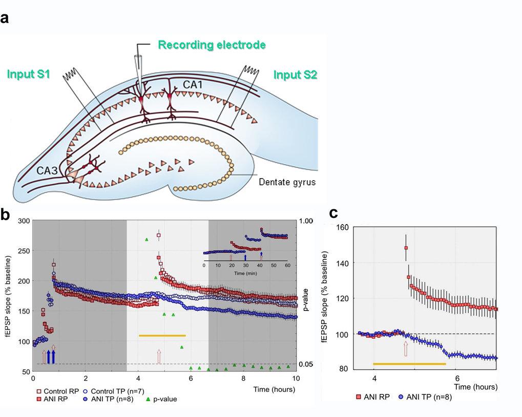 <b>a</b>, Versuchsaufbau zur Bestimmung der Rolle von Plastizitätsfaktoren in Nervenzellen - schematisch dargestellt: In zwei verschiedenen Regionen w