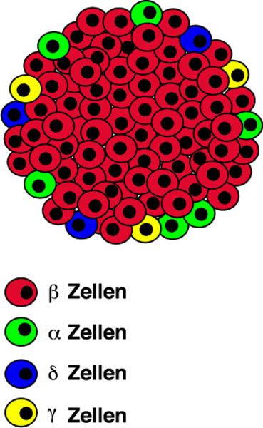 Zoom 1293750011