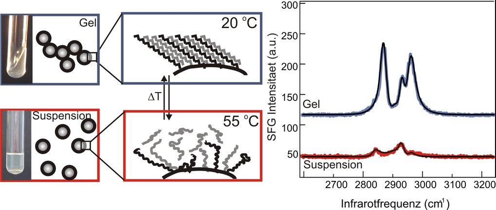 Bei 20<sup>°</sup>C (oben) ist die kolloidale Suspension gelartig; die Kolloide liegen enger beieinander und ihre Oberflächenstruktur ist wohlgeordnet