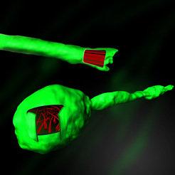 Im Inneren einer Verkürzungsknolle (unten) sind die Mikrotubuli durcheinandergeraten. Nur wenn diese Protein-Röhrchen parallel angeordnet sind (oben),