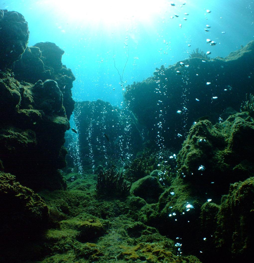 Korallenriff, das erhöhten Kohlendioxid-Konzentrationen ausgesetzt ist. Nur wenige Korallen überleben unter diesen Umweltbedingungen.