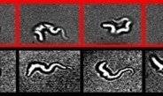 Sleeping sickness parasite masters three different swimming modes