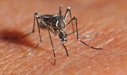 How anti-mosquito repellents disorient insects