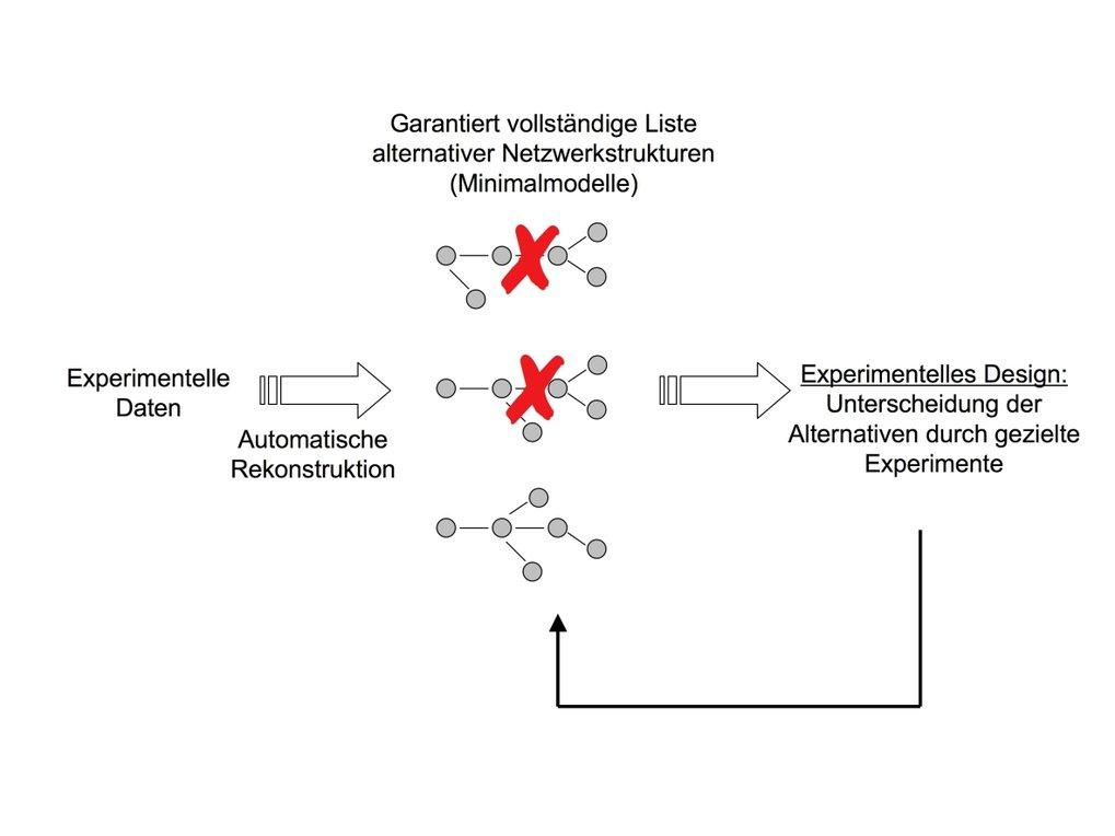 Strukturbeweis durch Ausschluss: Automatische Rekonstruktion von Netzwerken auf der Grundlage experimenteller Datensätze.