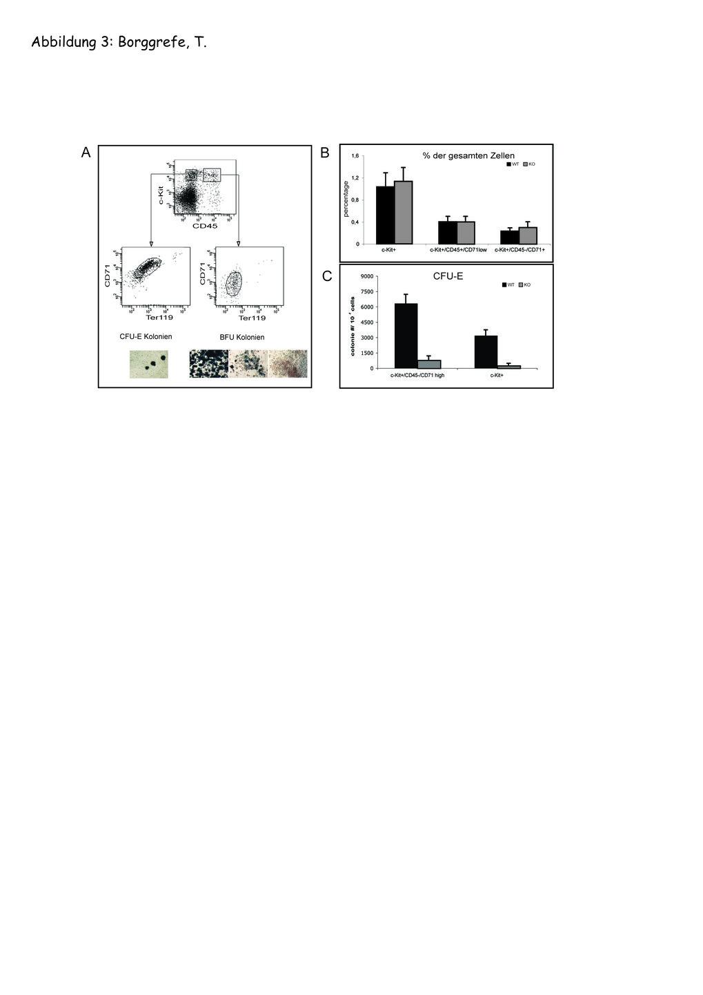 Bildung von erythroiden Kolonien von Wildtyp- und Med1-defizienten Vorläuferzellen: A) Vorläuferzellen wurden mit den Markern c-Kit, Ter-119 und CD71