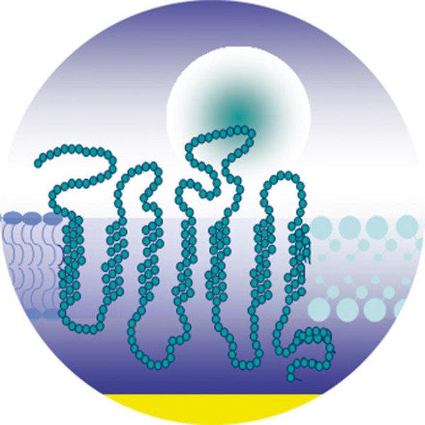 Abstrakte Darstellung einer synthetischen Matrix, die ein Geruchsrezeptormolekül enthält. Links wird die Matrix durch Phospholipidmoleküle dargestellt