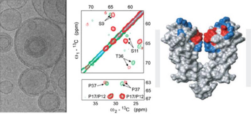 Festkörper-NMR-Spektren eines in einer künstlichen Zellmembran eingebauten Ionenkanals.  Messungen wurden in An- (rotes Spektrum) und Abwesenheit (grü