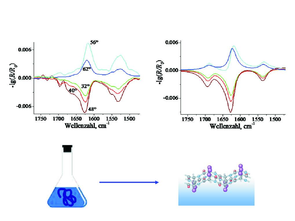 Oben: Experimentelle IRRA-Spektren (links) eines adsorbierten Amyloid β (1-40) Films, gemessen bei verschiedenen Einfallswinkeln und p-Polarisation, i