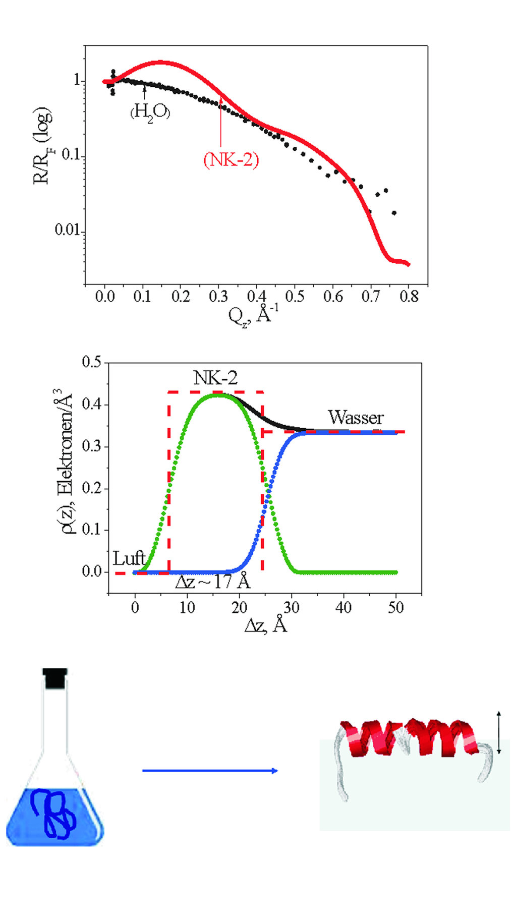 Oben: Röntgenreflektivität R eines Peptidfilms (NK-2 adsorbiert an die Flüssigkeit/Luft-Grenzfläche) normiert auf die Fresnel-Reflektivität RF einer i