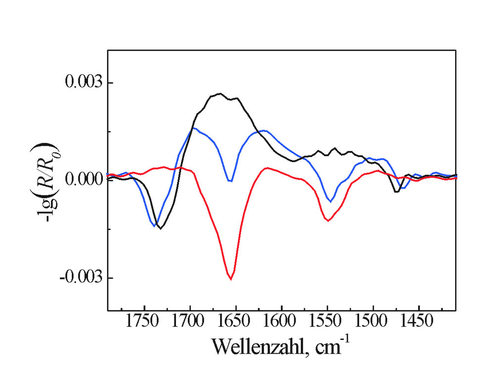 Vergleich der experimentellen IRRA-Spektren eines adsorbierten Peptids (NK-2) (rot), einer reinen Phospholipidmonoschicht (DPPG – 1,2-dipalmitoyl-phos