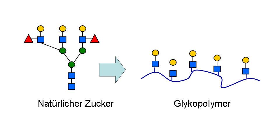 Bild 2: Vom natürlichen Oligosaccharid zum Glykopolymer