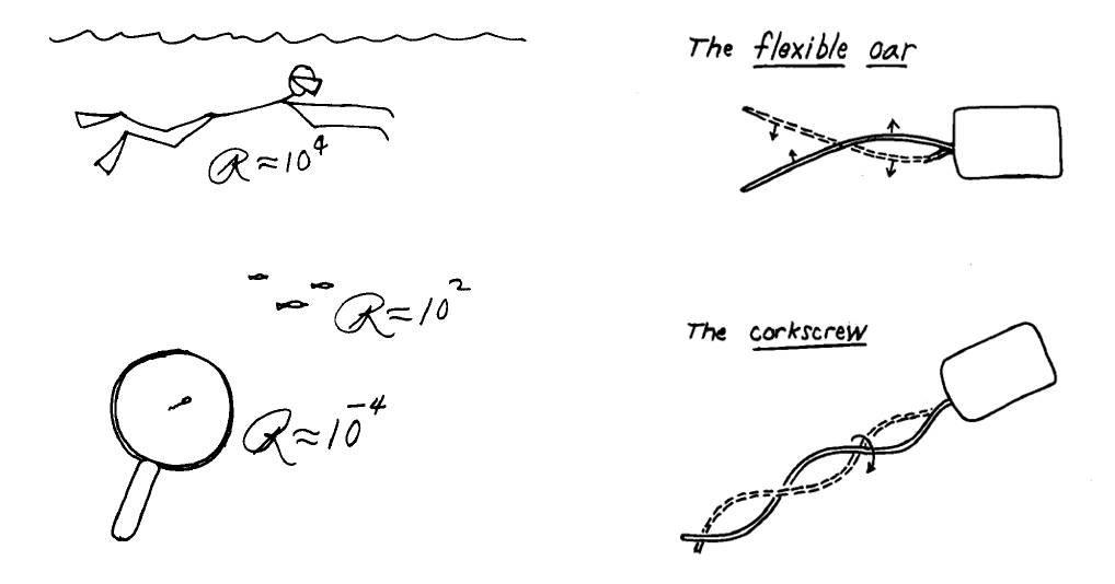 <strong>Abb. 1: </strong>Skizze von Purcell [2]. Reynoldszahlen (links) und rechts zwei der nicht-reziproken Bewegungsmechanismen von Mikroorganismen:
