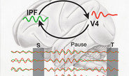 Synchronous oscillations in the short-term memory