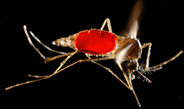 Transgene insects: scientists call for more open data