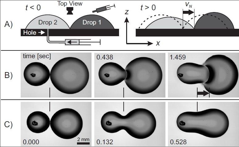 Abb. 4: Verzögerte Tropfenkoaleszenz Kommen zwei Tropfen aus gleichen Flüssigkeiten seitlich miteinander in Kontakt, so ziehen sie sich an und vereini