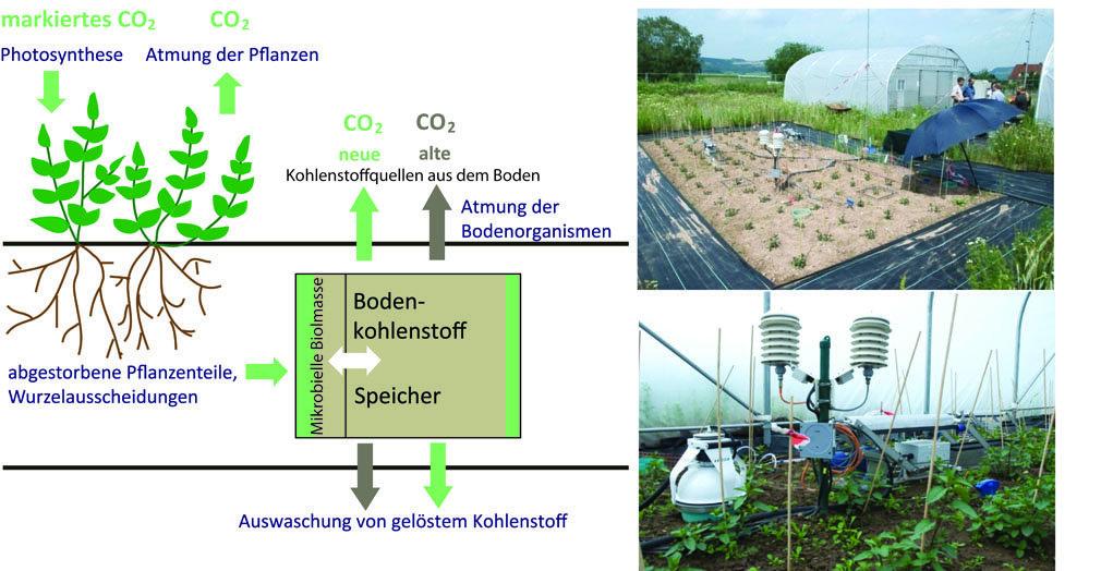 Unser wichtigster kohlenstoffspeicher max planck for Boden zusammensetzung