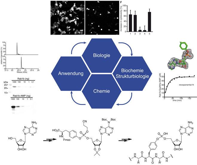 Abb. 3: Synergistik von Chemie und Biologie in der Analyse von Legionellenproteinen. Die Verwendung chemischer und biologischer Methoden hilft den For