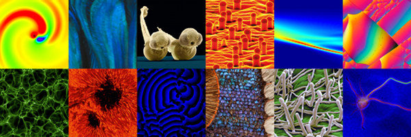Collage of images from the Images of Science exhibition
