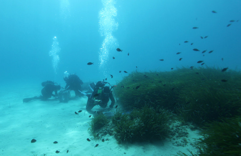 In the shallow waters off the coast of Elba the divers can easily study the habitat of Olavius algarvensis.
