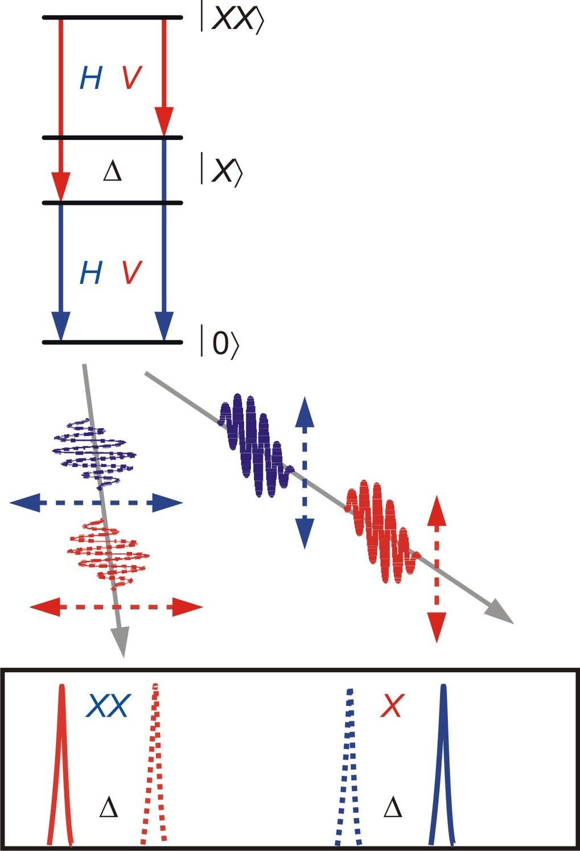 <strong>Abb. 3:</strong> Schematische Darstellung der biexzitonischen Kaskade, die zur Erzeugung polarisations-verschränkter Photonenpaare führen kann