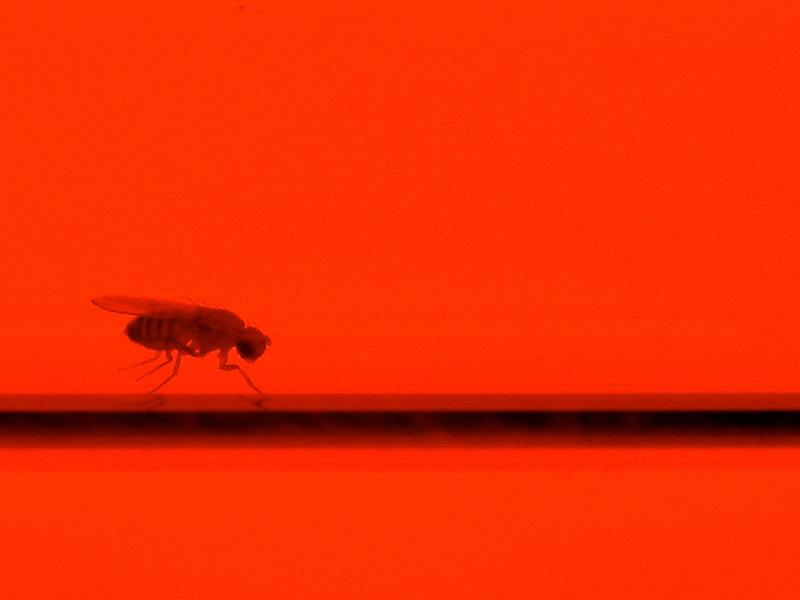 fliegen verarbeiten anziehende und abschreckende ger che in unterschiedlichen hirnregionen max. Black Bedroom Furniture Sets. Home Design Ideas