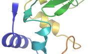 Ultrakurze Röntgenblitze gestatten Einblicke in die Atomstruktur von Makromolekülen unter Verwendung winziger Proteinkristalle