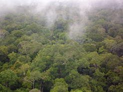 Plant salts in clouds over rainforests: organic compounds condensate at potassium salts out of plants and fungi, so that aerosol particles form. They act as condensation seeds for fog and cloud droplets. How and why plants emit nonvolatile anorganic salts is as of yet unknown.