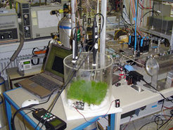 A plant chamber used to investigate methane formation in plants - in this example, in ryegrass (Lolium perenne).