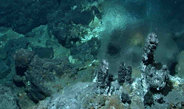 New deep-sea hot springs discovered in the Atlantic