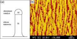 Silicon nanowires produced with aluminium as a catalyst. (a) Schematic representation of a silicon nanowire. (b) Dyed scanning electron microscopic im